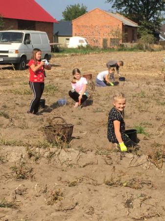 Zbieranie ziemniaków